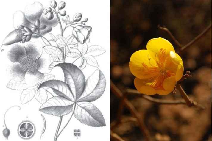 Evento marca os 200 anos da chegada do naturalista Auguste de Saint-Hilaire ao Brasil