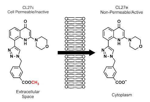 Esquema de alteração da estrutura molecular da pré-droga em meio intracelular