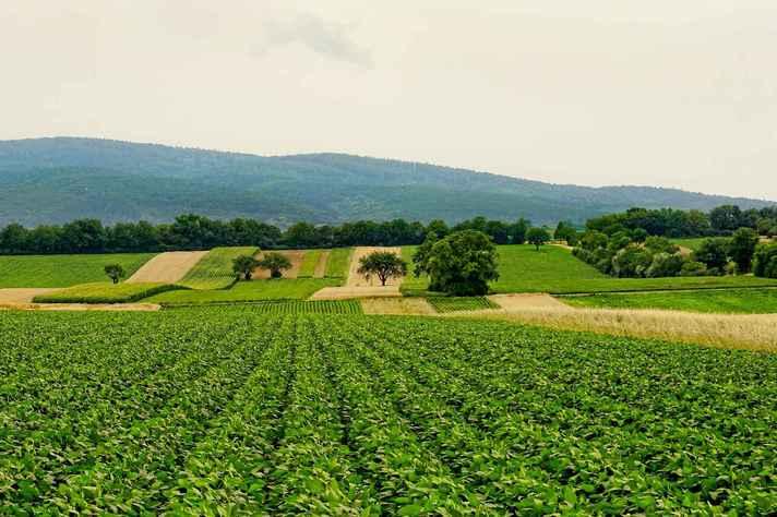 Projeto de lei visa flexibilizar o uso de agrotóxicos no Brasil