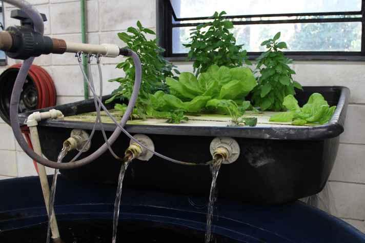 Sistema de aquaponia, que integra produção de peixes e plantas, será levado à Mostra deste dia 8