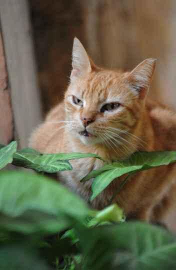 Gato no campus Pampulha: