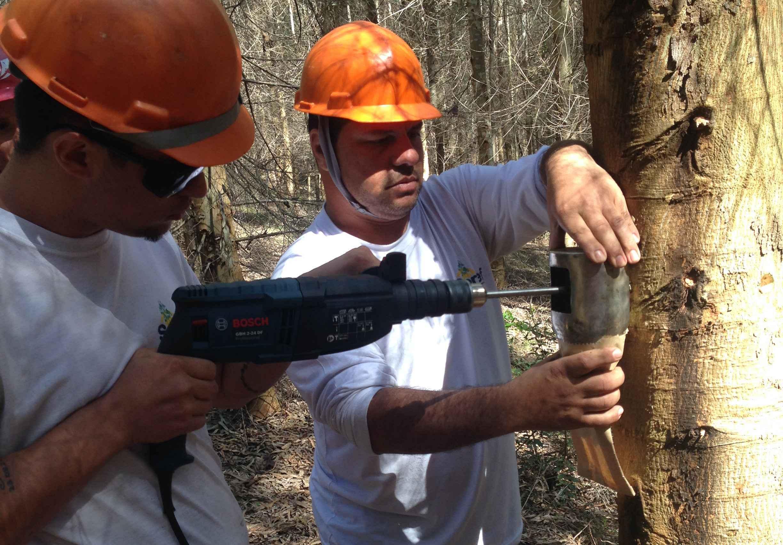 Amostras são retiradas das árvores para análise em laboratório