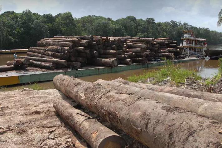 Alta exportação de produtos primários como a madeira pode estar associada a atividades ilegais