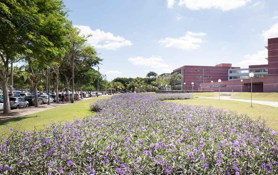 Jardim em frente à Faculdade de Ciências Econômicas da UFMG