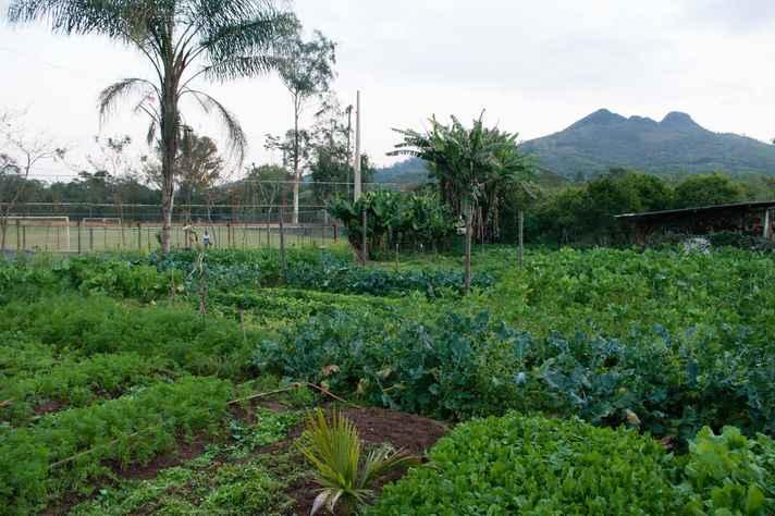 Alternativas para produção de alimentos estão entre temas do evento