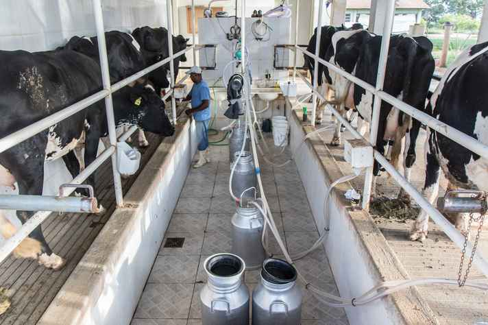 Criação de bovinos de leite no campus Montes Claros