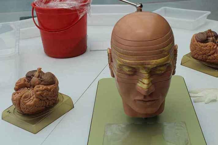 Oficinas vão revelar informações sobre o cérebro humano