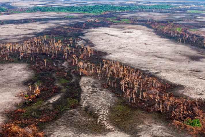 Amazônia registra desmatamento recorde no mês de junho