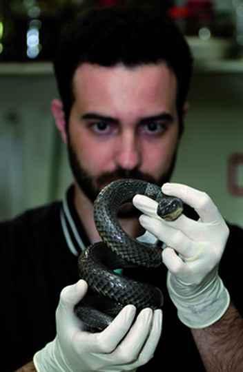 O trabalho de dois anos foi coordenado pelo estudante de doutorado Henrique Caldeira Costa