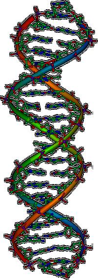 Representação da estrutura do DNA