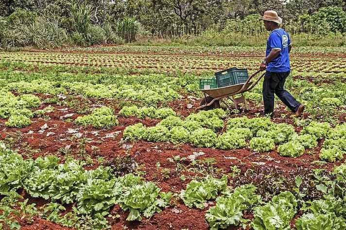 Agricultura familiar é um dos temas de pesquisa de Cristina Parente