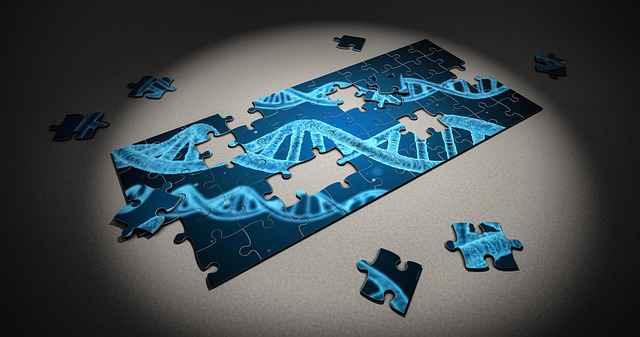 Figura compara o DNA a um quebra-cabeça
