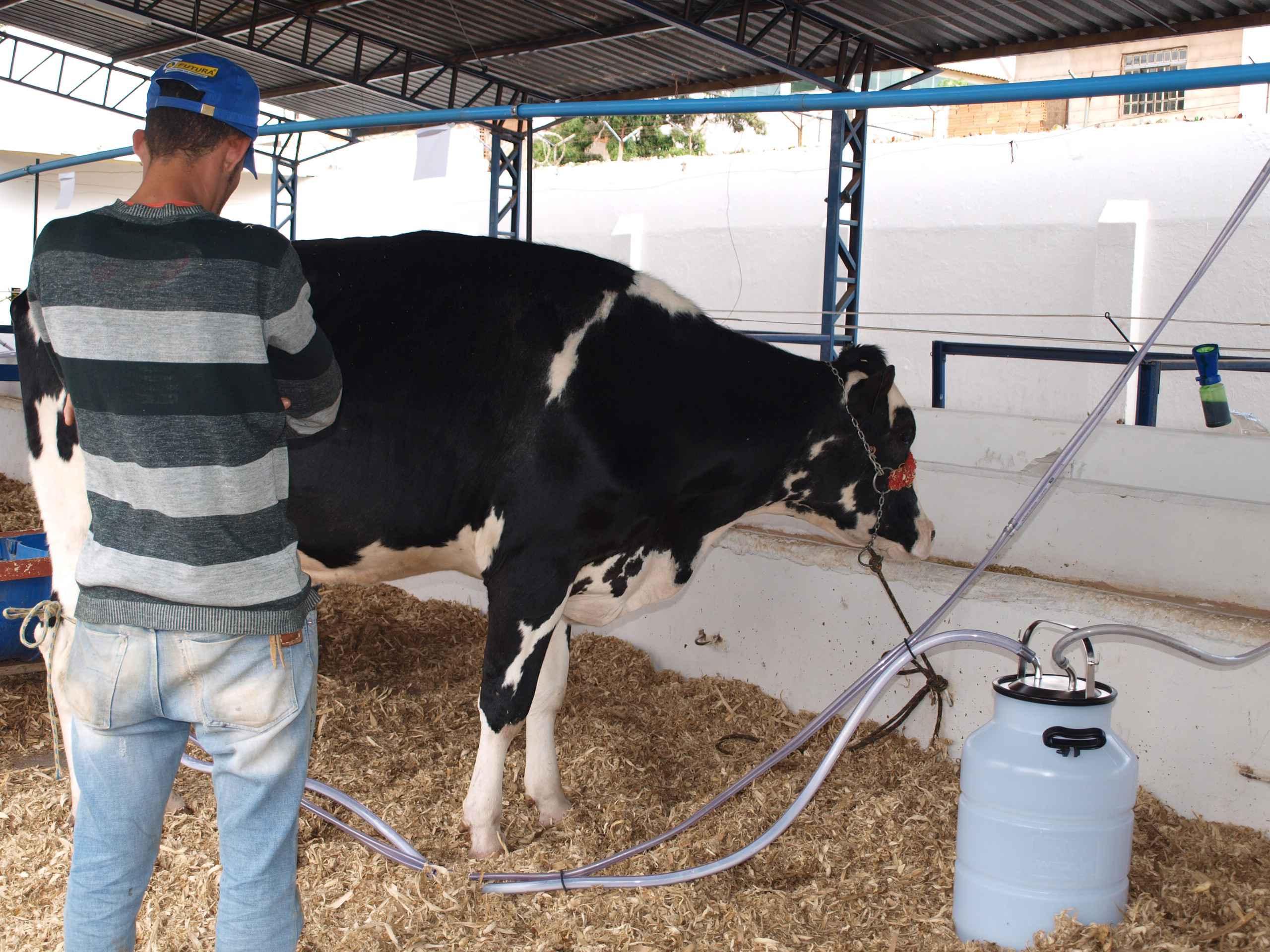 Estudantes vão colaborar com a organização do torneio leiteiro