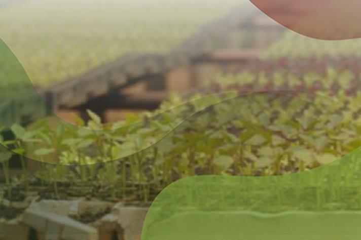 Produções audiovisuais abordam a agroecologia