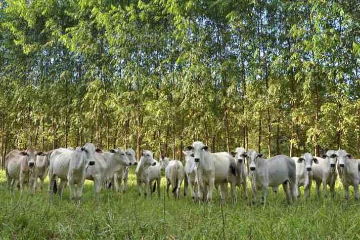 Embrapa apoia projetos que integram lavoura, pecuária e floresta