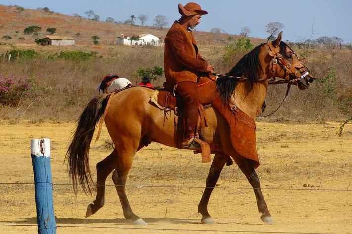 Pela capacidade de se adaptar a seca, cavalo nordestino é muito utilizado na agricultura e no transporte na região Nordeste