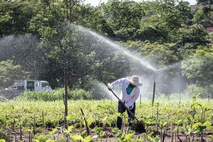 Cultivo de hortaliças no ICA com técnicas de irrigação