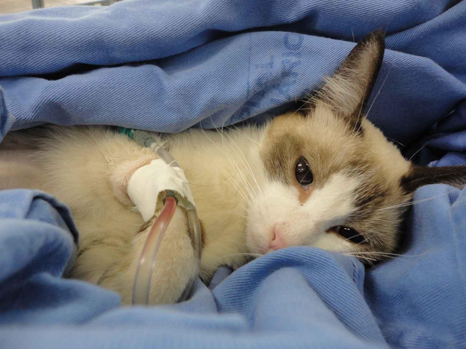 Animais serão castrados no Hospital Veterinário da UFMG