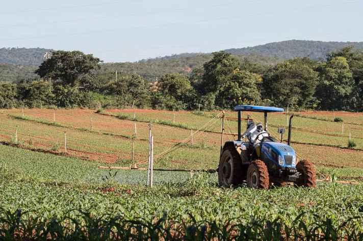 Plantação de milho no campus Montes Claros