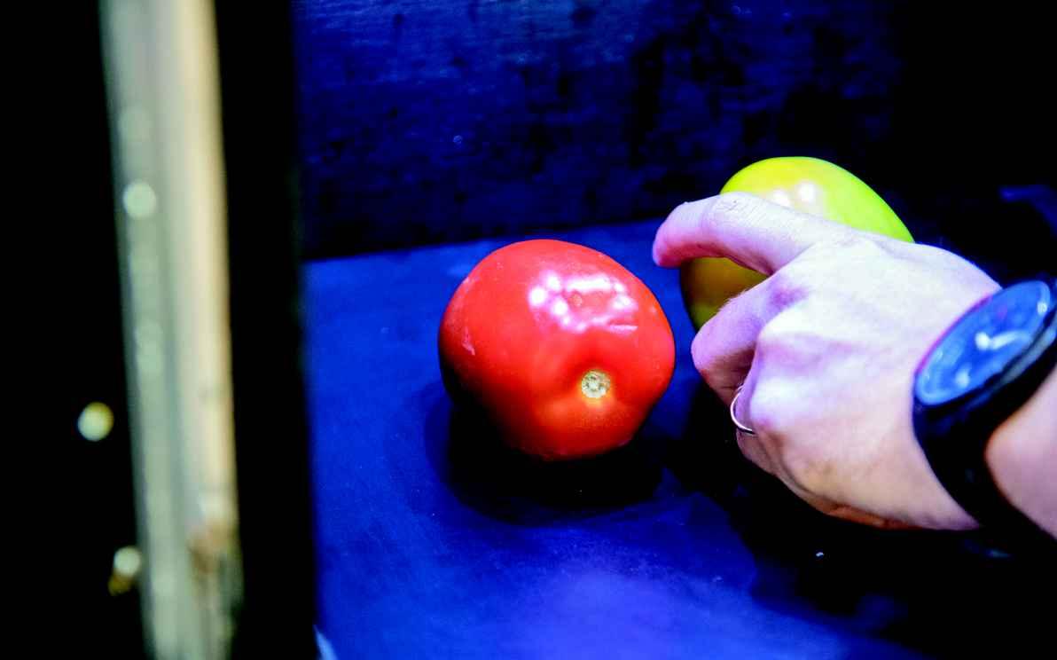 Testes com tomates apresentaram resultados positivos