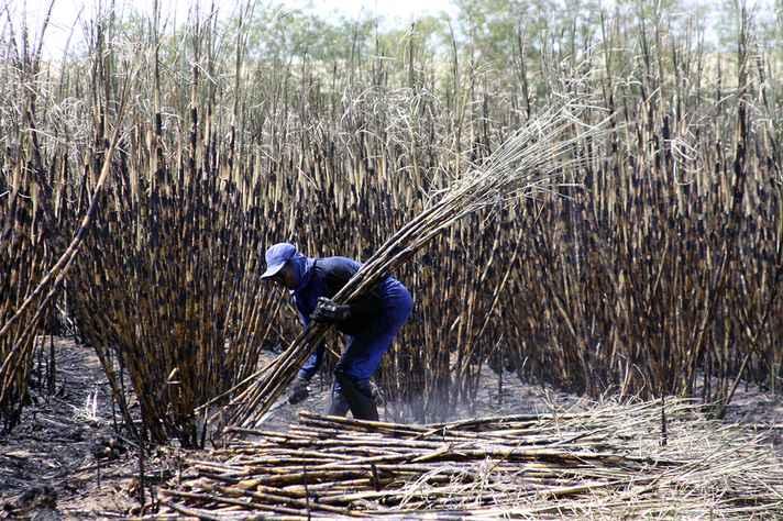 No Brasil, condições de trabalho análogas às de escravo são recorrentes na colheita de cana