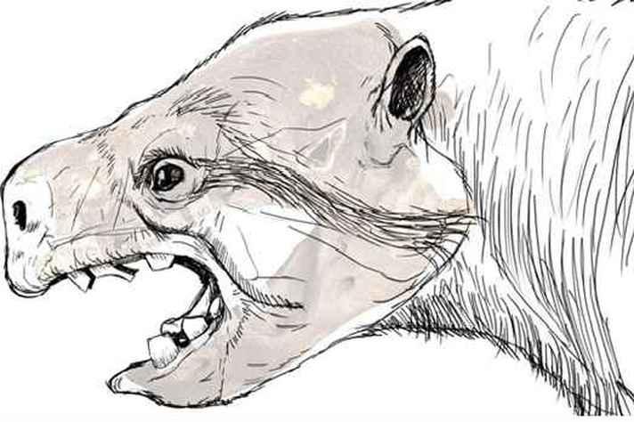 Desenho projeta como seria a espécie de preguiça gigante