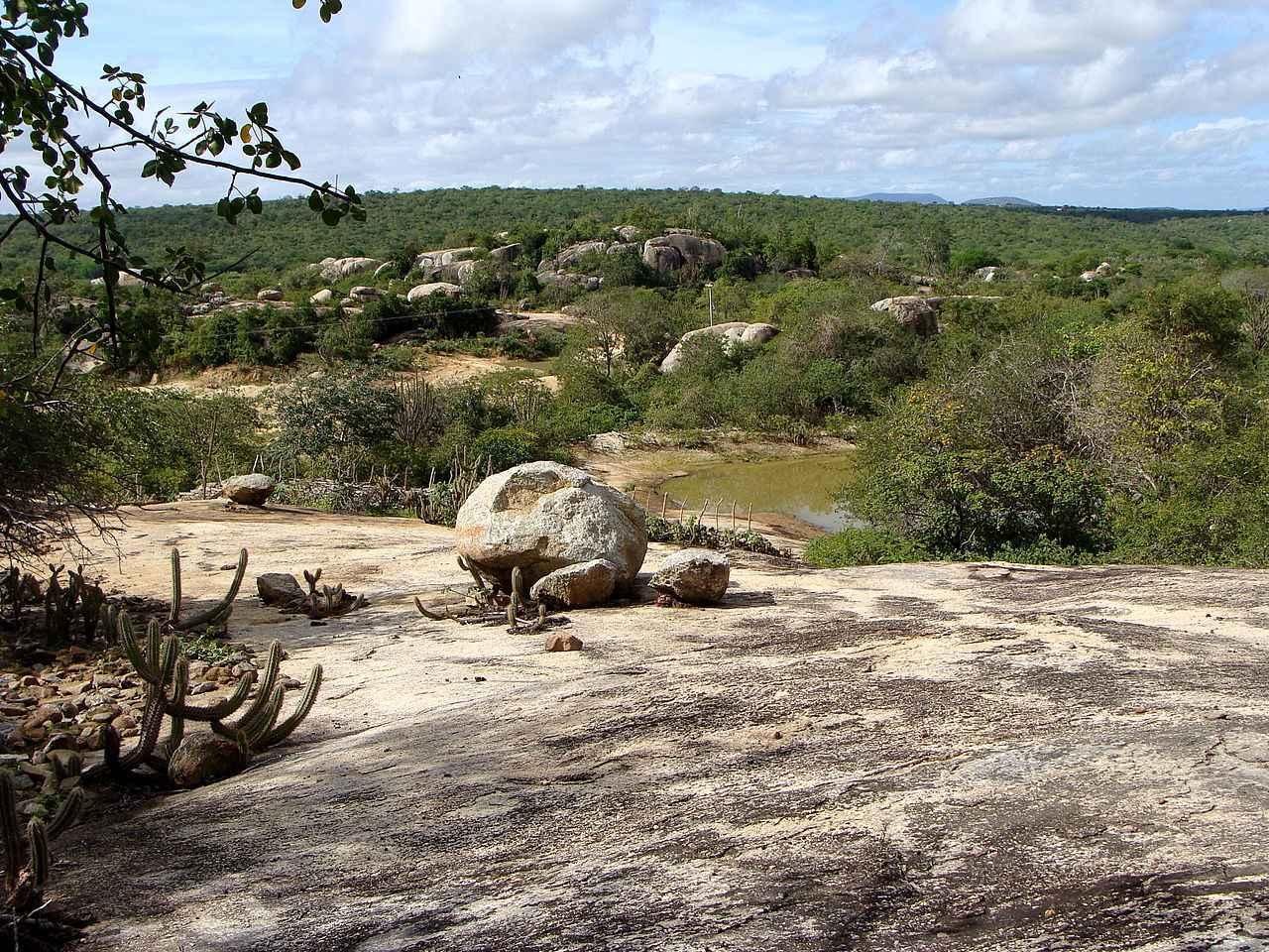 Ambiente de caatinga em estação chuvosa no município de Boa Vista, na Paraíba: