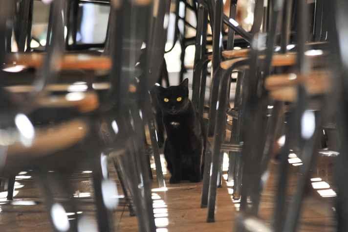 Gato em área da Fafich: