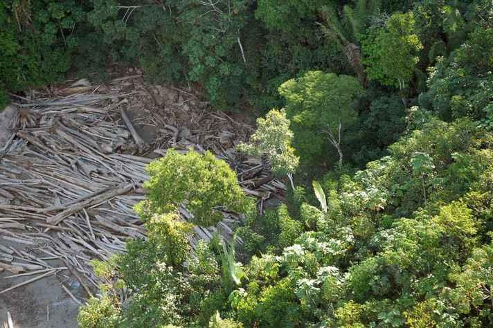 Segundo pesquisadores, aumento do desmatamento na Amazônia Legal teve início em 2012.