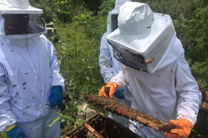 Trabalho em apiário parceiro da Escola de Veterinária: recursos para laboratório dedicado a abelhas e derivados