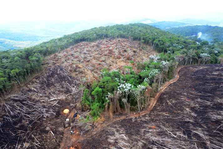 Desmatamento deve ser combatido para redução da emissão de gases de efeito estufa