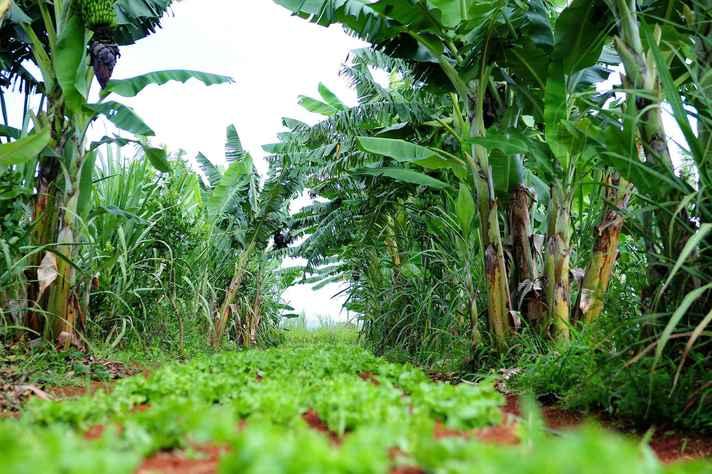 Nova lei desconsidera métodos inovadores de cultivo, como a agroecologia