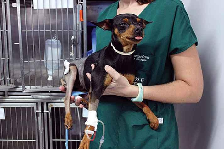 A cadela 06 foi resgatada com duas fraturas