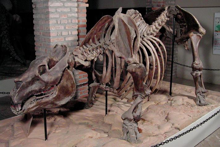 Réplica de esqueleto de animal em exposição no Museu de História Natural