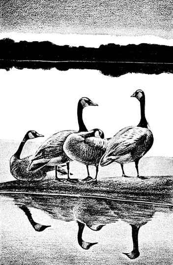 Ilustração de Charles W. Schwatz