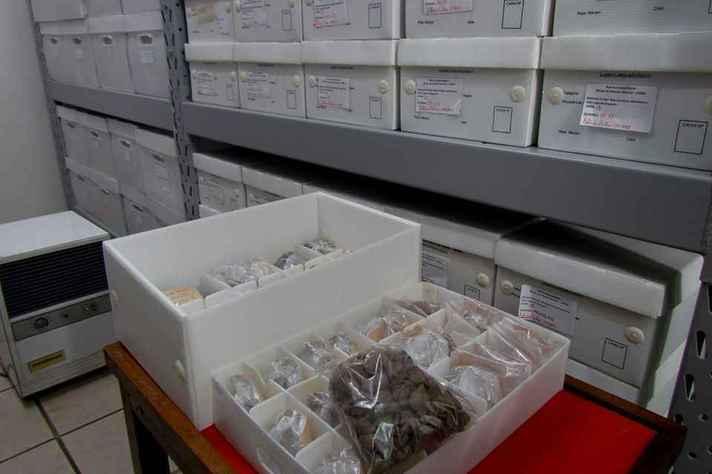 Acervo da reserva técnica do Museu de História Natural e Jardim Botânico: