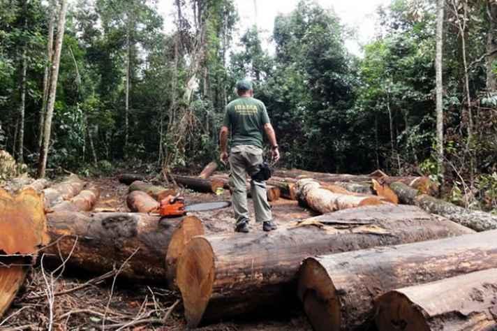 Brasil tem altas taxas de desmatamento