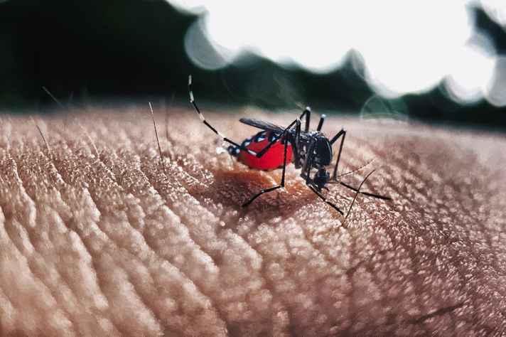 Três postos de saúde de Belo Horizonte abrem neste sábado para atender casos suspeitos de dengue