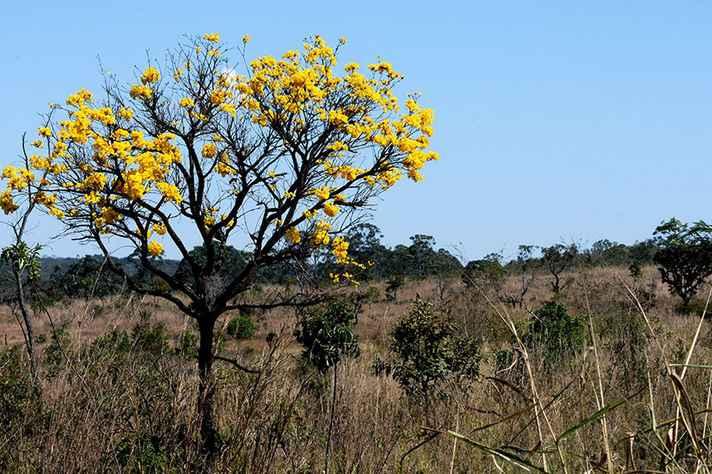 Cerrado: bioma foi um dos mais atingidos por queimadas no ano passado