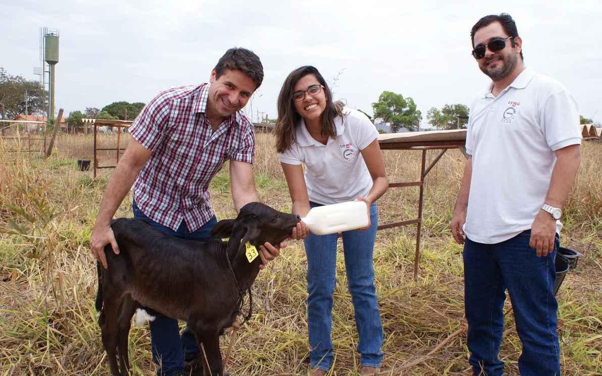 Na fazenda do ICA, em Montes Claros, com os professores Eduardo Duarte (à esquerda) e Mário Mourthé, a aluna Iara Reis, do curso de Zootecnia, faz o aleitamento artificial de bezerro da raça Girolando
