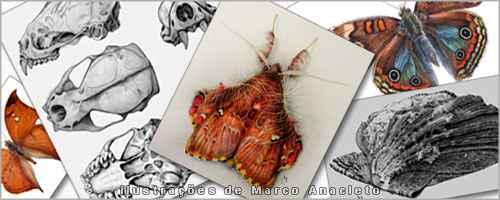Desenhista e animador, Marco Anacleto é  ilustrador permanente do Laboratório de Ilustração Científica do ICB