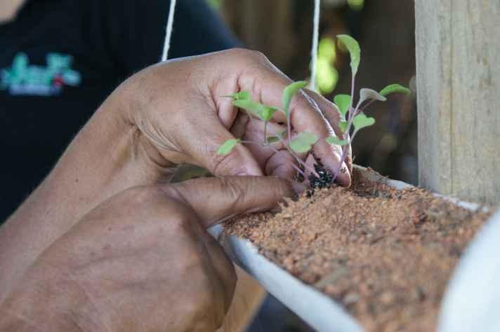Cultivo em ambiente urbano: novas ruralidades