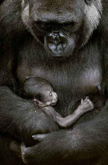 Macacos do zoológico de BH: hospedeiros terminais