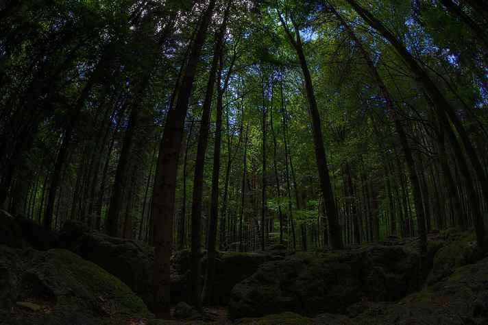 Floresta