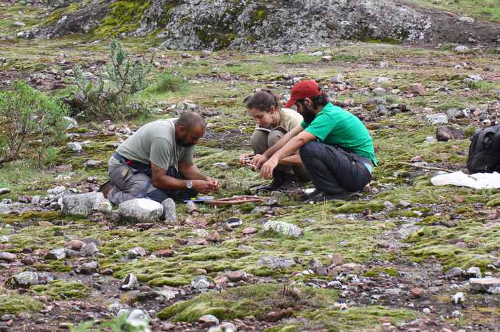 Pesquisadores do ICB estudam cactos ameaçados de extinção na Serra do Sudeste, em Caçapava do Sul (RS). Eles marcam indivíduos do cacto Parodia crassigibba
