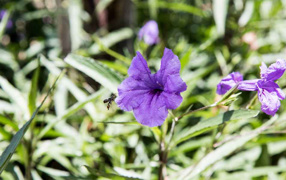 Flores no cerrado, no campus regional da UFMG em Montes Claros