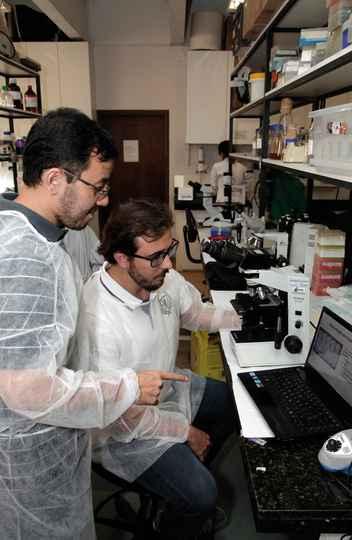 Fujiwara e Gazzinelli: identificação de antígenos na urina