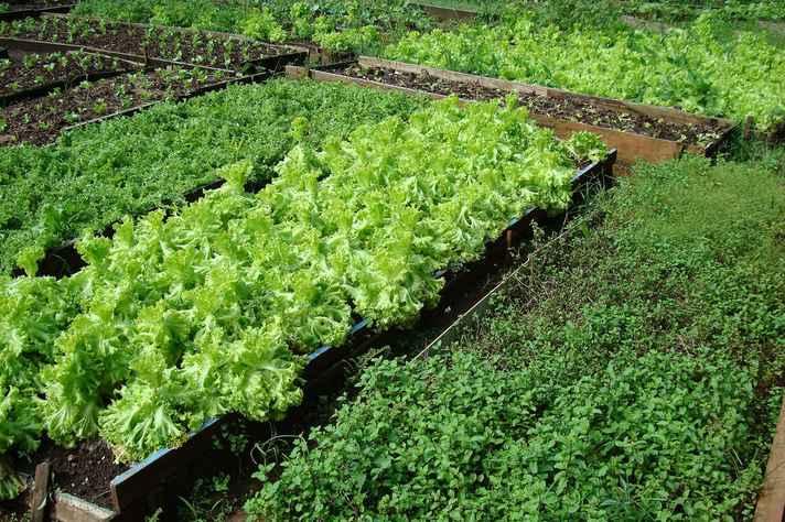 Projeto de lei altera a política de agrotóxicos
