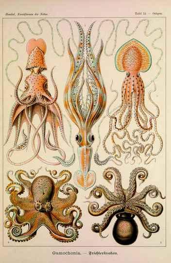 Polvos, em Kunstformen der Natur (1889-1904), de Ernst Haeckel