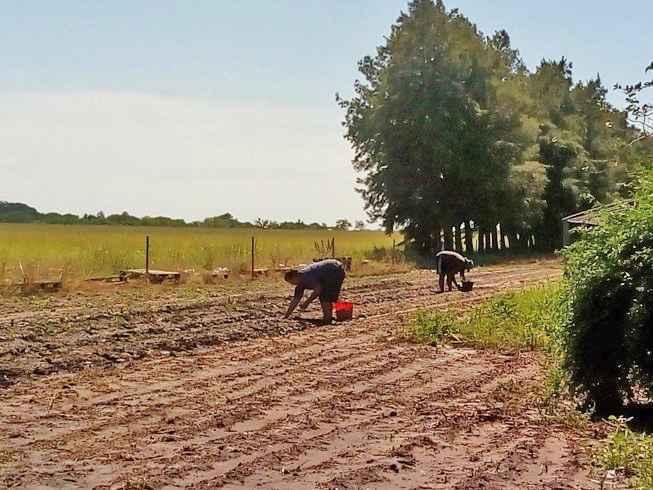 Produtores rurais de Santa Fé, na Argentina
